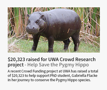 UWA Crowd Research project raises $20,323 to help save the Pygmy Hippo