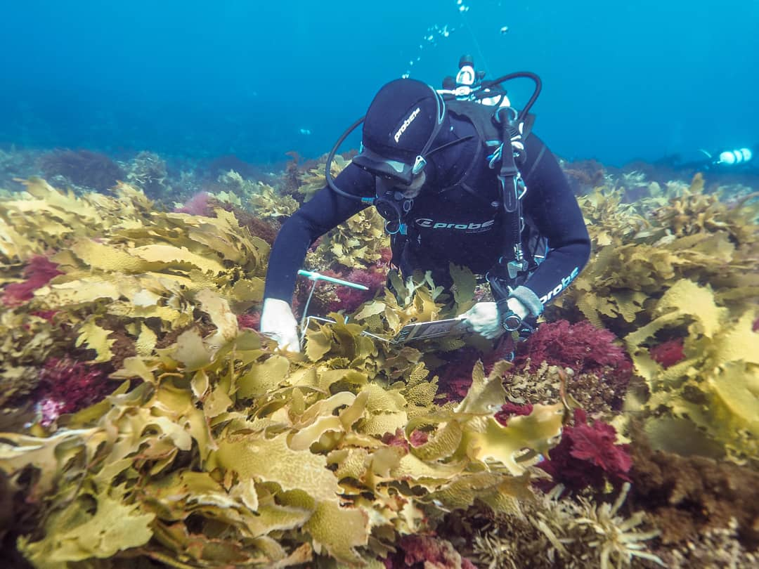 Researching the health of kelp forests in the Great Southern Reef